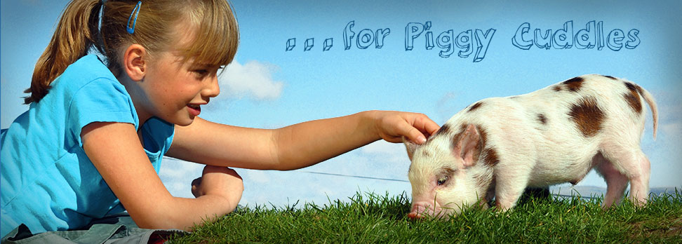 Pennywell Farm for Piggy Cuddles